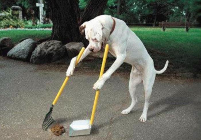 The Guide Dog Poop Picking Up Lecture