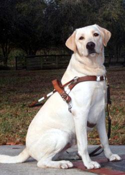 Labrador pet guide
